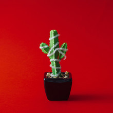 Cactus With Christmas Tree Decoration. Minimal New Year Concept.