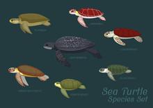 Various Sea Turtle Species Set...