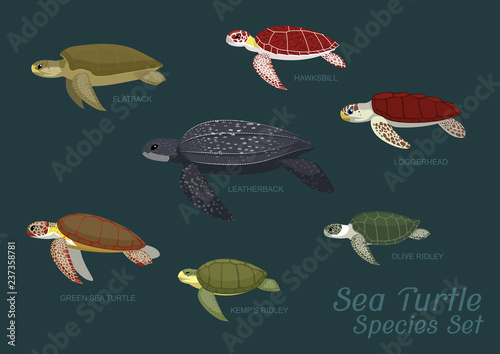 Fotografie, Obraz Various Sea Turtle Species Set Cartoon Vector Illustration