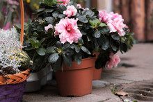Many Pots Of Flowers And Plants Are Worth Outdoor