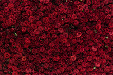 Natural Red Roses Background, ...