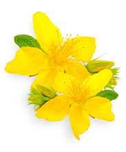 St. John's Wort Isolated On Wh...