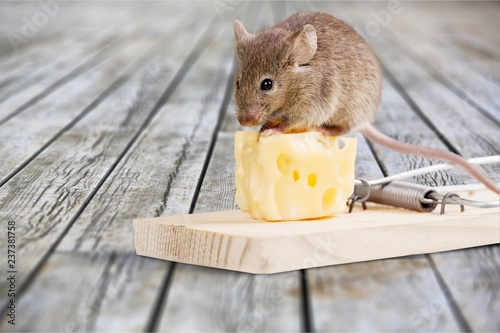 Mouse trap with cheese and mouse on background