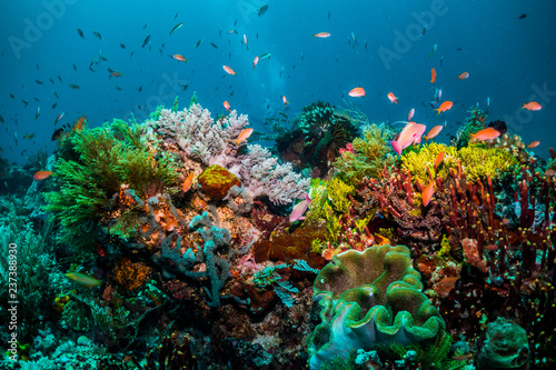 Poster Sous-marin Vibrant reef life, amazing colours
