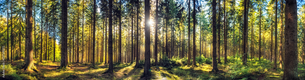 Fototapety, obrazy: Panoramic autumn forest landscape