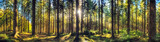 Fototapeta  - Panoramic autumn forest landscape