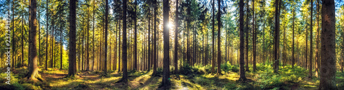 Spoed Fotobehang Bos Panoramic autumn forest landscape