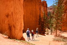 Family Hiking In The Red Mountains On Summer Vacation. People With Backpacks Hiking On  Navajo Loop Trail. Bryce Canyon National Park, Utah, USA