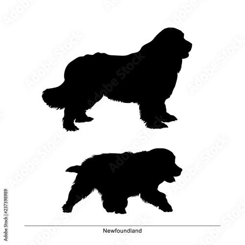 Obraz na płótnie Newfoundland breed dog. Vector silhouette of the dog