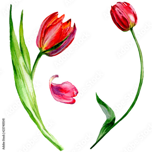 Photo  Amazing red tulip flower with green leaf