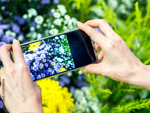 Take photo beautiful flower by smartphone