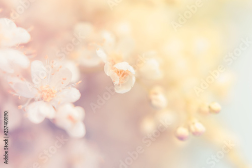 Fotografie, Obraz  Small white summer flowers on a soft background