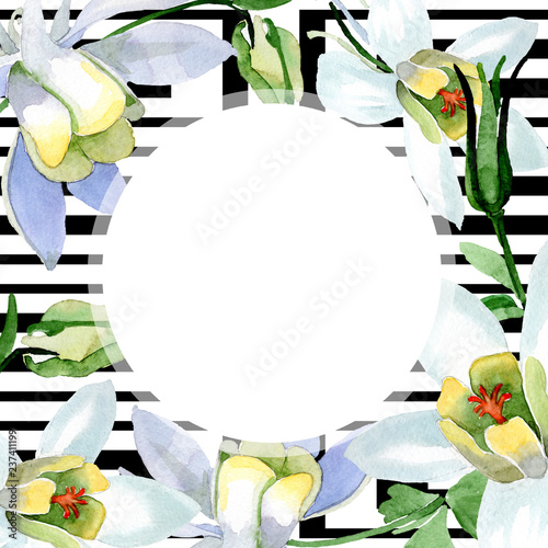 Canvas Print White aquilegia