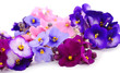 canvas print picture - Violets beautiful flowers, background.