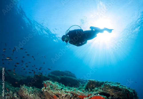 Scuba diver observes life on a reef.