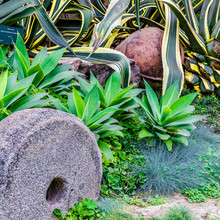 Stone Millstone In The Garden ...