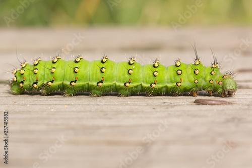 Fotografía  Empirical Caterpillar