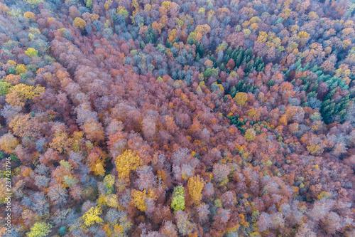 Fototapety, obrazy: Luftaufnahme eines herbstlich gefärbtem Mischwaldes