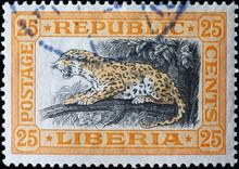 Leopard On Vintage Postage Sta...