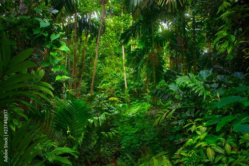 Asian tropical rainforest Fototapeta