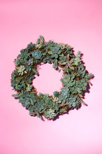 Succulent Wreath On Pink