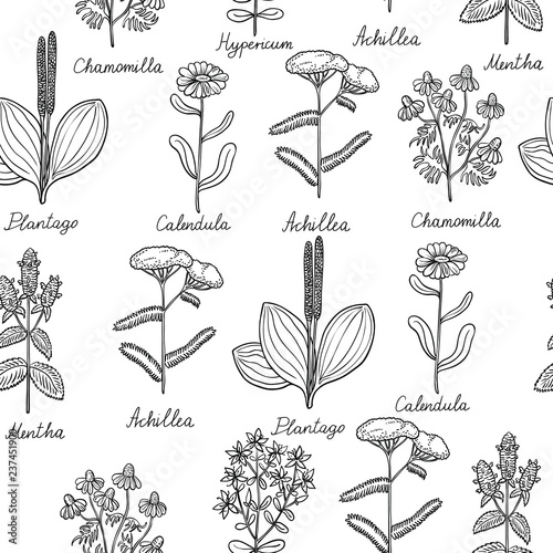 Fotografia  Seamless pattern with medicinal plants