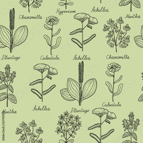 Photo  Seamless pattern with medicinal plants