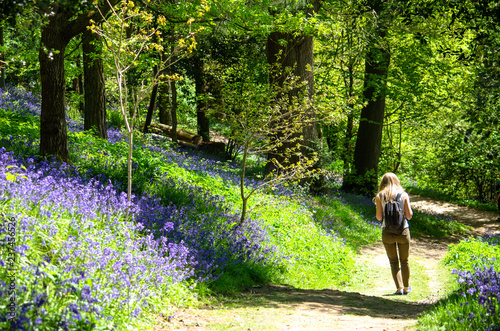 Photo A woman walking by bluebell flowers in the woods in spring, Kent, England