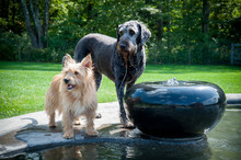 Two Dogs Standing By Fountain