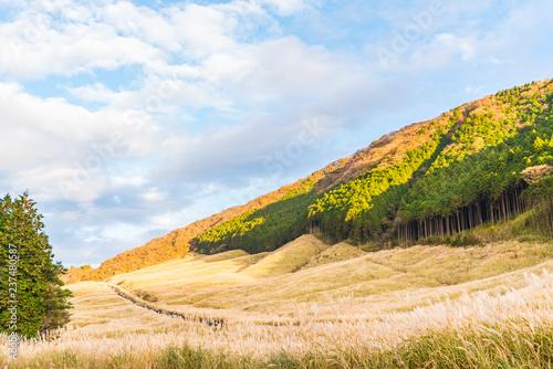 Fototapeta 日本の秋 箱根仙石原のススキ草原 obraz
