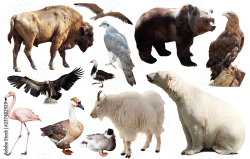 Fotografie, Obraz  Set of fauna of North American animals.