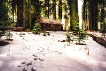 Cabin In The Winter Woods, Mar...