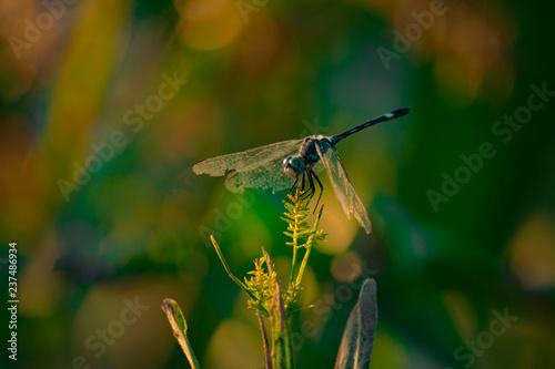 Fotografía  Insecto, Libelula