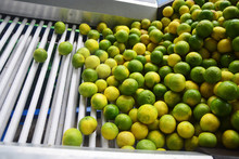 Green Fresh Lemon Lime. Pile O...