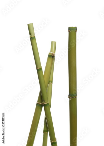 Green bamboo sticks isolated on white background with clipping path