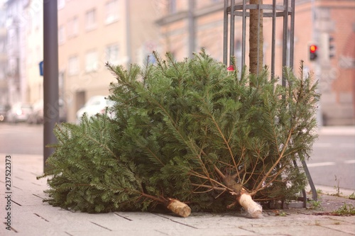 Fototapeta Discarded christmas trees after the Holiday on the sidewalk. obraz