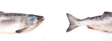 Fish Head And Tail On White Ba...