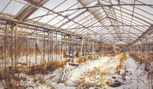 Abandoned Industrial Greenhouse.