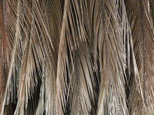 Dry Palm Leaf