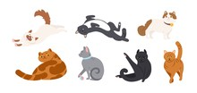Set Of Adorable Cats Of Various Breeds Lying, Sitting, Stretching Itself, Playing With Ball. Bundle Of Funny Purebred Pet Animals Isolated On White Background. Flat Cartoon Vector Illustration.
