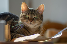 Cute Marble Cat In Sunlight On Paper, Clever Face, Eye Contact, Comical Funny Beast