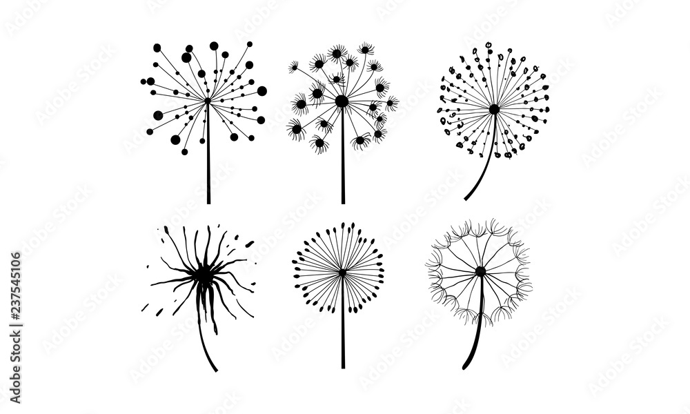 Fototapety, obrazy: Vector set of 6 dandelions in linear style. Flower with fluffy seeds. Floral theme