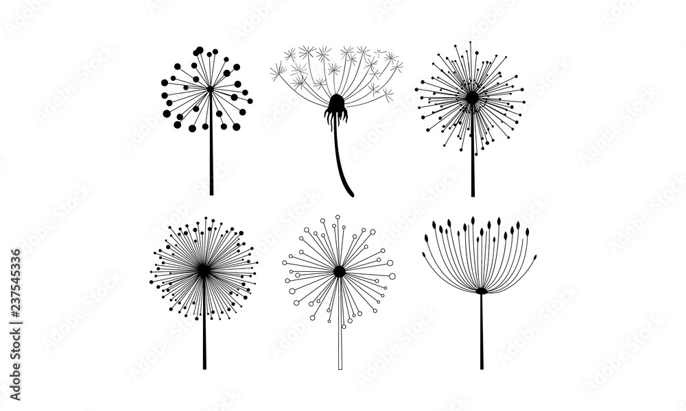 Fototapety, obrazy: Vector set of 6 linear dandelion flowers with fluffy seeds. Floral theme. Decorative elements for postcard or notebook