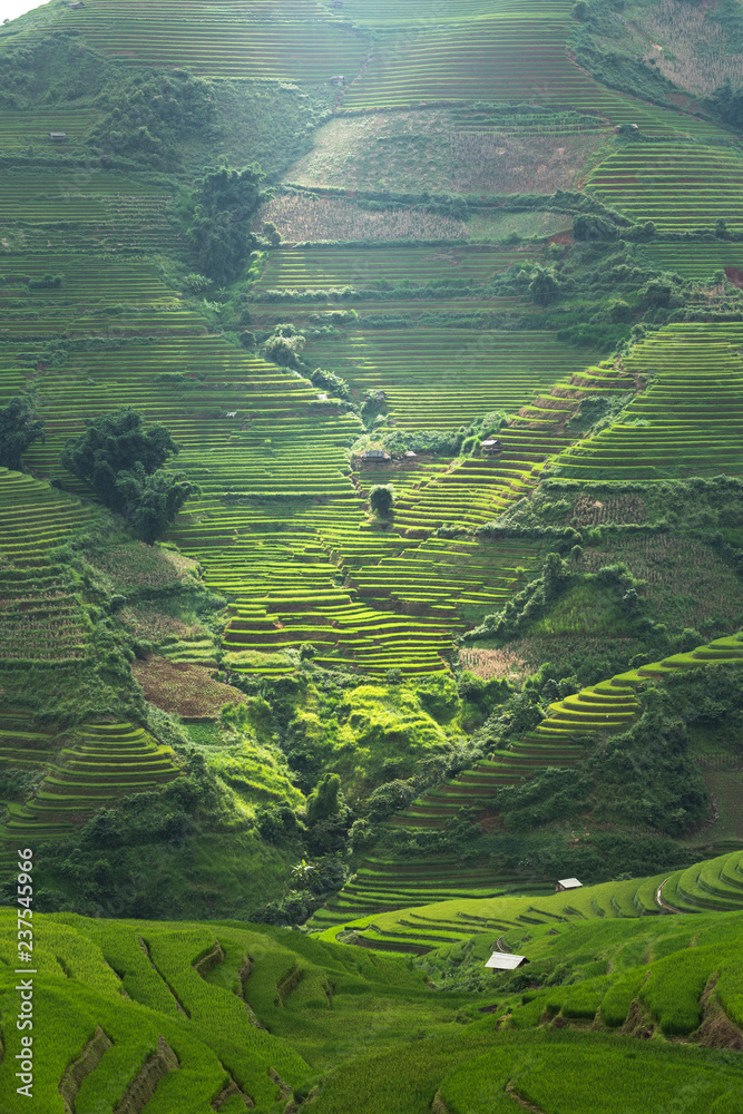 Fototapeta Rice terrace Mountains in Mu can chai, Vietnam 