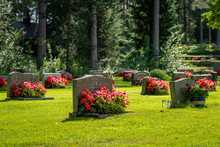 Rows Of Grave Stones With Bright  Red And Pink Flowers
