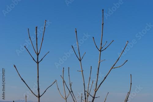 Poster Birds on tree branch without leaves on a blue sky background.