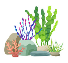 Seaweed Rocks And Plants Set V...