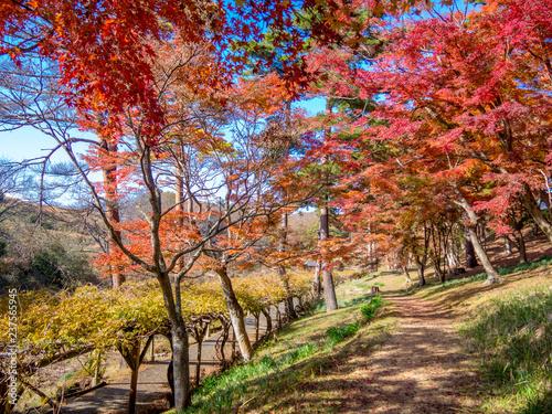 【静岡県伊豆市】秋の公園風景【修善寺虹の郷】
