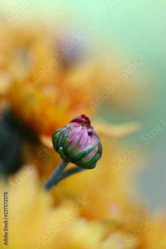 Photo  Flower waiting to bloom