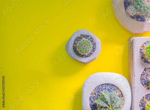 Fotografia  View of different cactus trees grown in a tree pot viewed from a